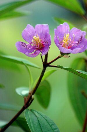 beautiful purple flowers photo