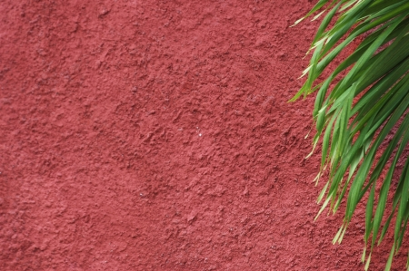 a maroon walls rough texture with foliage photo