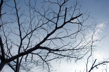 low viewpoint of silhouette branches with blue sky background photo
