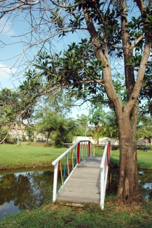 garden with a pond and bridge photo