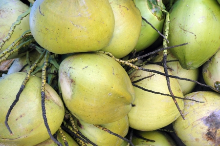 bunch of coconuts photo
