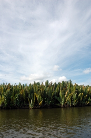 tropical forests on the river photo