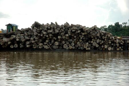 pile of logs on the river photo