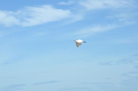 crane fly: crane fly Stock Photo