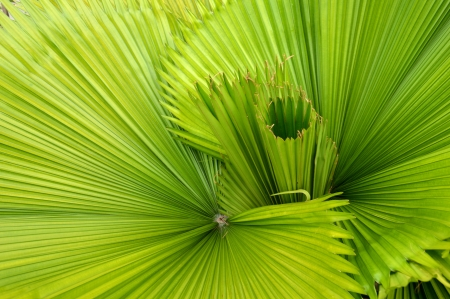 detailed pattern and texture of green palm leaf photo