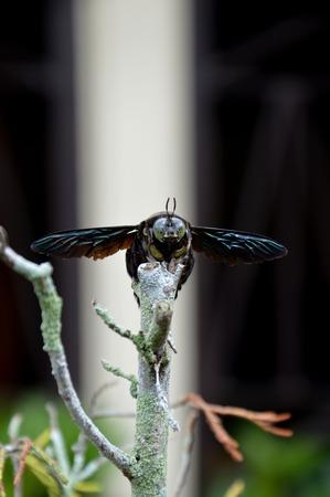 black beetle against natural blur background photo