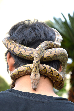 sliding scale: phyton snake on the head man