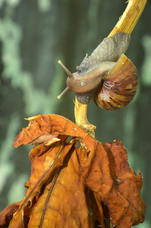 slithery: Snail on the leaf stalk