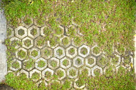 octagonal: pattern octagonal on the paving block at park