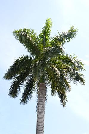 nut trees against blue sky photo