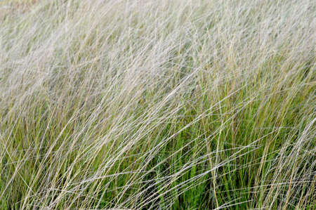 soggy: Weed grass in the sunshine