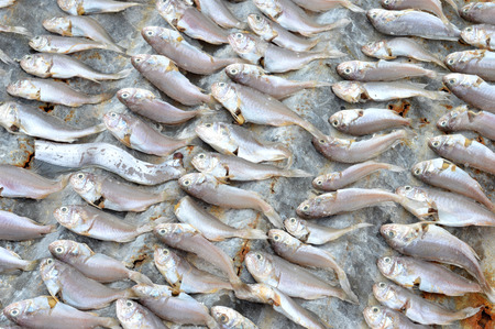 bluefish: patterns of dried fish background