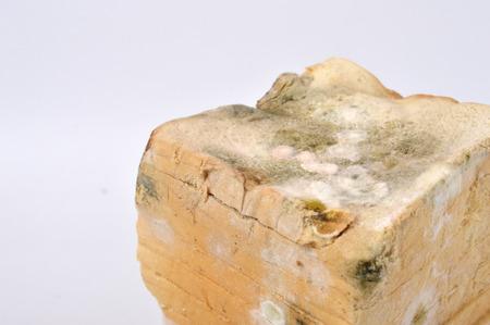 perishable: stale white bread on white background Stock Photo