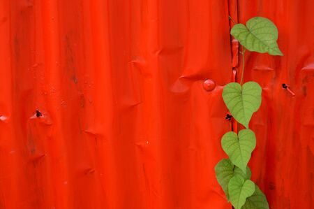 zinc: red zinc wall background