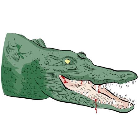 head of a crocodile
