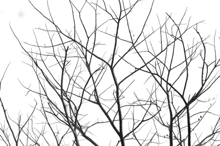 begin: dried branches on a big tree with blue sky background Stock Photo