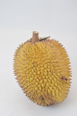 Elaii, tropical fruits like durian fruit, tropical fruit that is found only in Borneo Indonesia isolated on white background