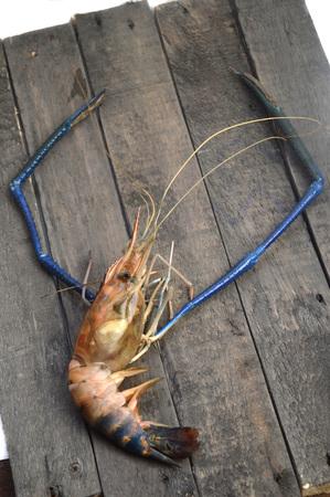 Giant river prawn (Macrobrachium rosenbergii) on wooden board Reklamní fotografie