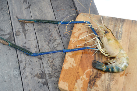 Giant river prawn (Macrobrachium rosenbergii) on wooden board Stock Photo - 124979322