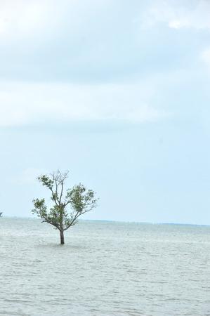 a mangrove tree on the edge of the sea