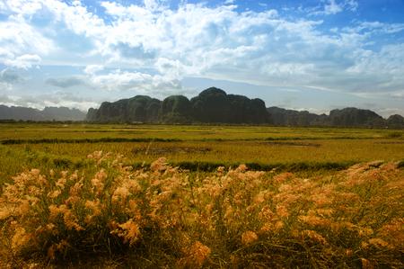 Village panorama in Rammang-rammang with karst mountains on South Sulawesi Imagens