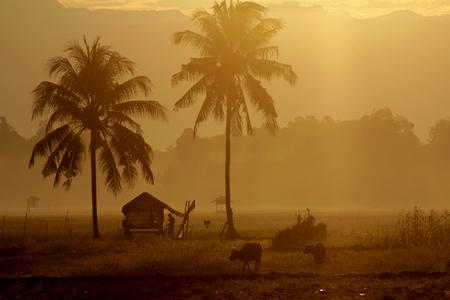 Village panorama on South Sulawesi Imagens