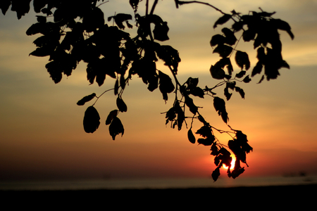 silhouettes leaf branches of trees on the sunset Banco de Imagens
