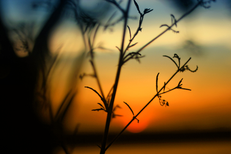 silhouettes leaf branches of trees on the sunset Banco de Imagens - 125056224