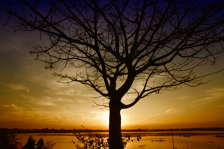 silhouettes of trees on the sunset