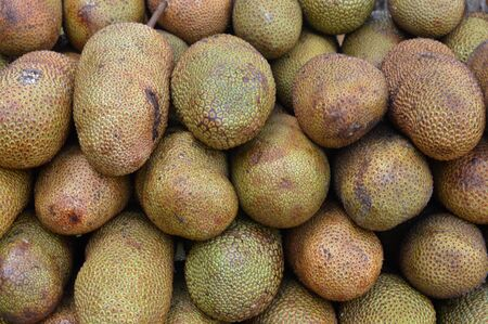 Cempedak is an excotic fruit found mostly in Indonesia and Malaysia. It's similar to jackfruit but a much more common jackfruit. 스톡 콘텐츠