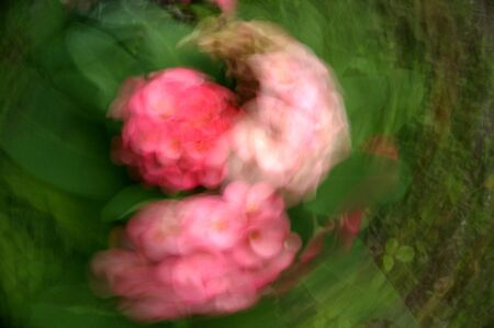 abstract blurred flower background by using zooming and panning techniques