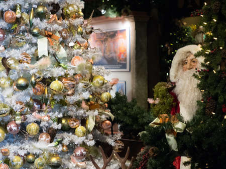 A man made santa claus with white beard and glasses peers from behind a green pine tree and looks at a beautifully decorated Christmas tree. The tree has many baubles and snow effect decoration