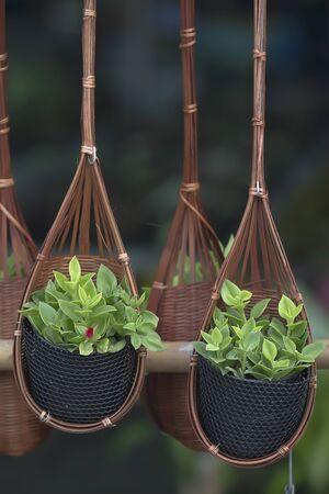 hanging basket: Plant in the hanging basket in garden