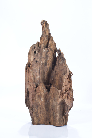 continuation: Dilapidated wooden snag isolated on a white background