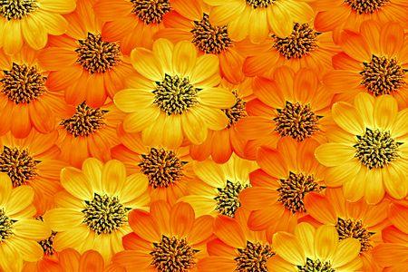 montage of yellow and orange flowers Stock Photo