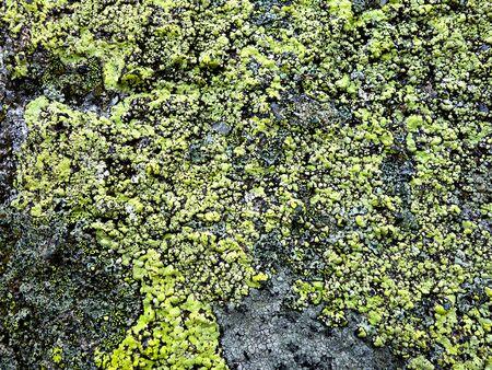 Lichen on a stone base
