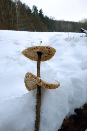 Skewered plain bread on stick in the snowy nature 스톡 콘텐츠