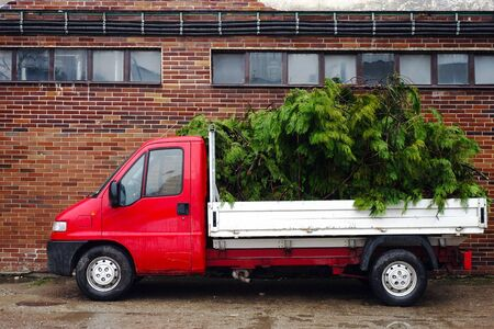 Loaded trimmed branches on the car