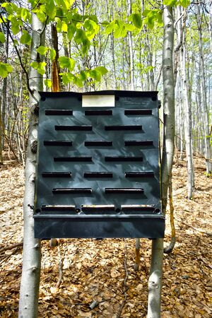 Forest trap on Ips typographus, bark beetle
