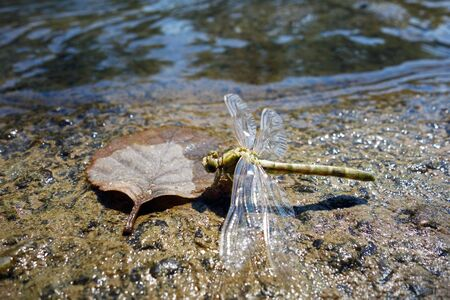 The birth of a dragonfly on the river bank