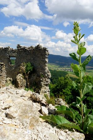 Mountain plants on the ruins of Jasenov Castle