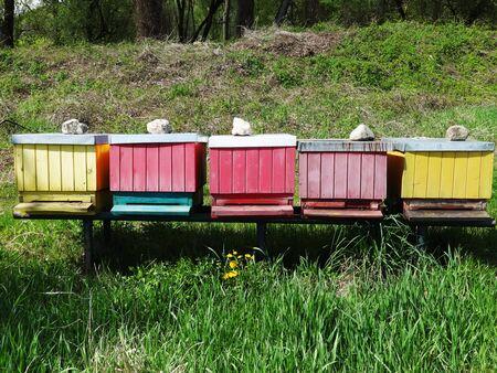 Bee hive 写真素材