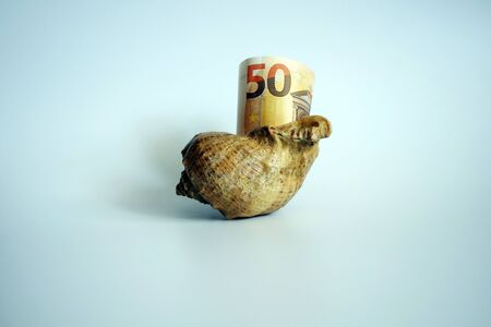 50 euros in sea shell