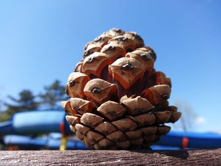 Pine cone stands on wooden railing 写真素材 - 137666150