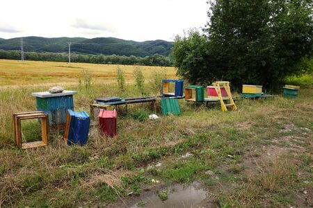 Plundered beehives near the field