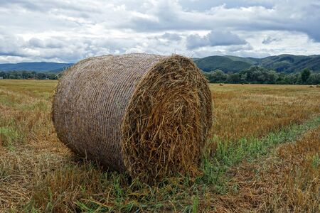 Rolled hay on the field Stok Fotoğraf