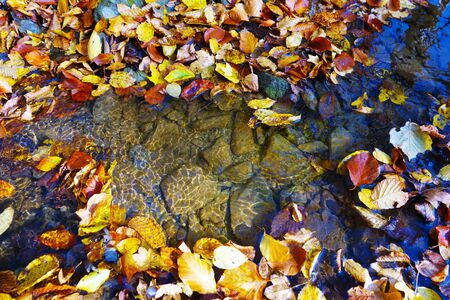 Autumn leaves in the brook