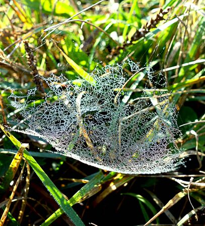Dewy spider web with drops of water 写真素材 - 137445836