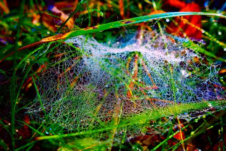 Dewy spider web with drops of water 写真素材 - 137443458