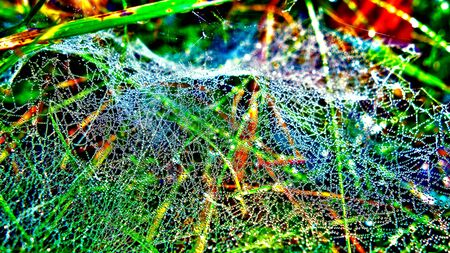 Dewy spider web with drops of water 写真素材 - 137443493
